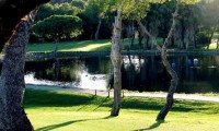 olive trees ling the fairway at las ramblas golf course